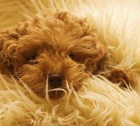 10 Adorable Pictures Of Dogs Who Love Rugs