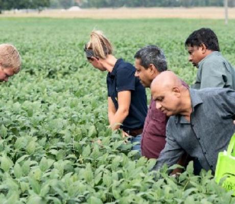 Farmers scramble to limit trade war damage