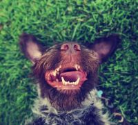 8 possible causes for your dog's bad breath