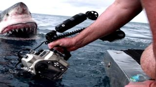 Great white shark gets up close and personal with filmmaker