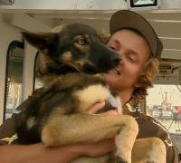 Dog Lost at Sea for Weeks Reunited With Owner