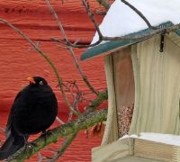 How to take care of birds this winter