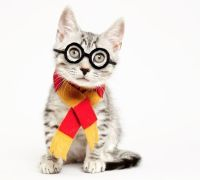 Shelter cats masquerade as pop culture icons